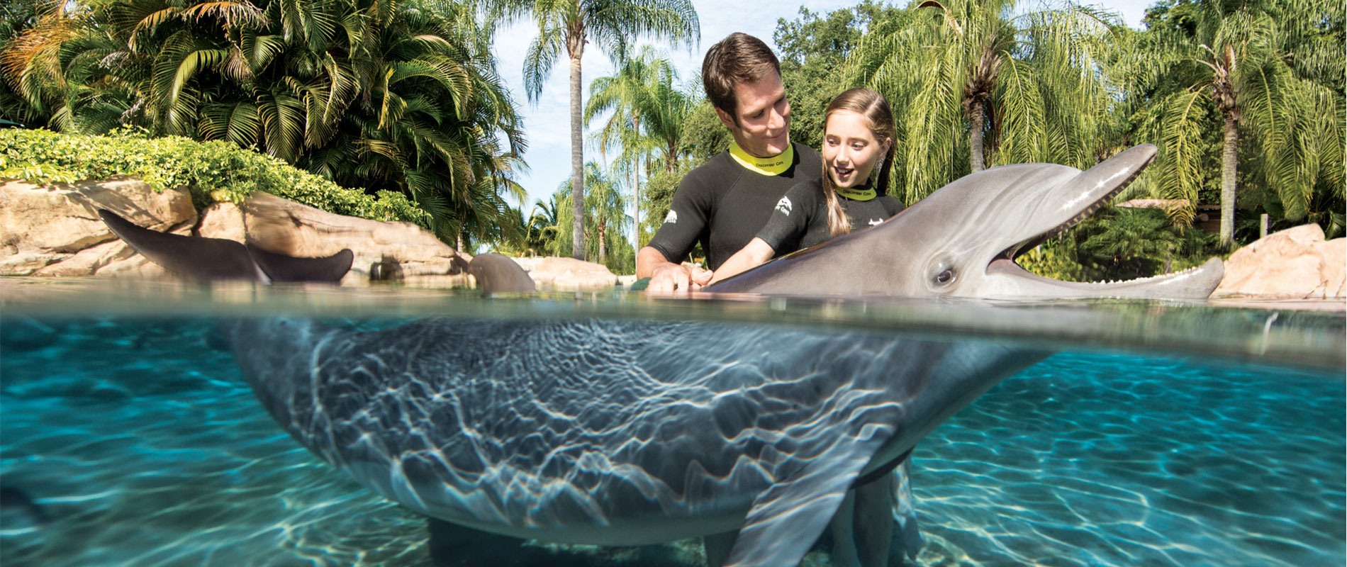 things-to-do-in-orlando-discovery-cove